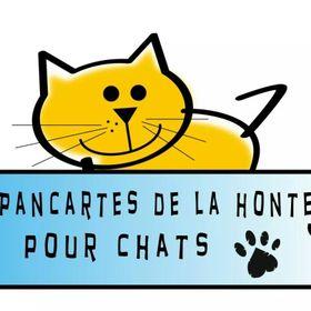 Pancartes de la honte pour chats
