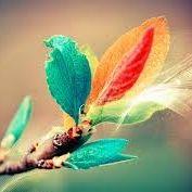 lovelybird