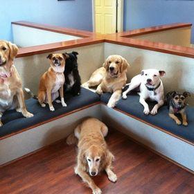 Beechmont Pet Hospital