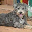 Maisy Otto