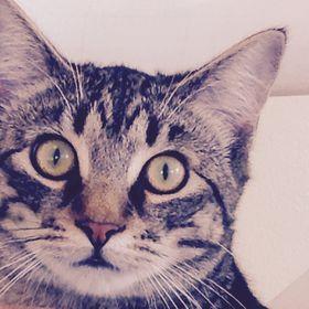 Meowzie_pants