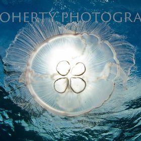 Doherty Photography
