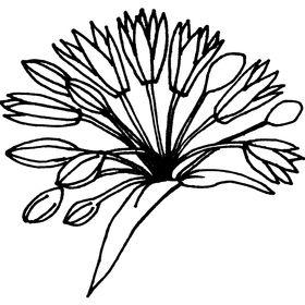 Allium Press of Chicago