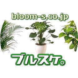 Blooming Scape