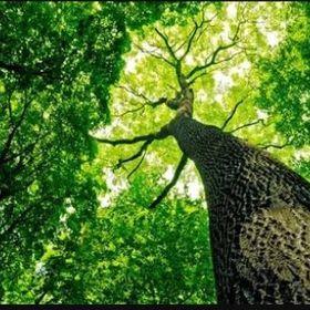 นาย ต้นไม้