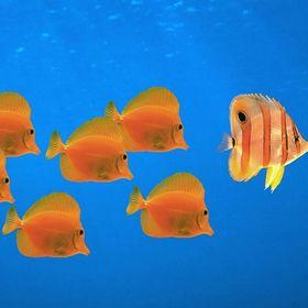 Rybičky -