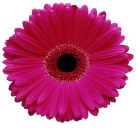 Burgess Florist +27 31 265 0112 - Westville Durban South Africa