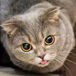 cats 343