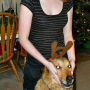 Pups en surprise Cups-Labrador-juste arrivé-Chenilles p/&p