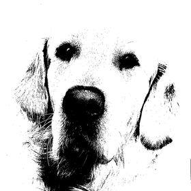 Pes Mikuláš