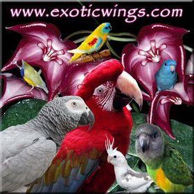 Exotic Wings & Pet Things