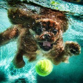 love doggy