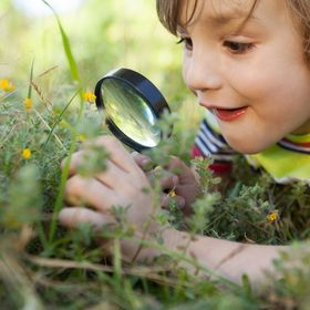 Curious Botanist