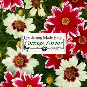 Cottage Farms Direct