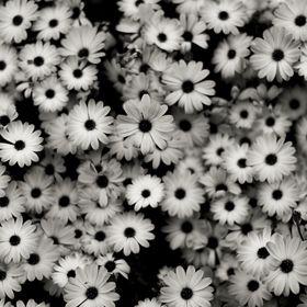 Bracciale FLOWER silicone Fullspot o/'clock colorati bracciali fiori grande Big