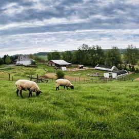 Homestead Hill Farm