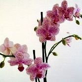 Newgarden Samiou Flowers