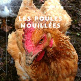 Les Poules Mouillées  🐓💚 - Poules de compagnie