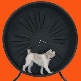 Pet Wheel