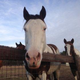 Hope-thru-Horses, Inc.