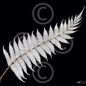 Rowena NZ - Aotearoa