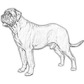 Best Molosser Dog Breeds