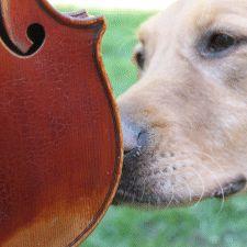 violin foundation