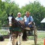 Chocolate Horse Farm Gypsy Vanner Horses