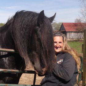 Kohler Farms-A Shire Horse Breeder