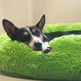 Perfect Pets   Calming Pet Beds