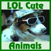LOL Cute Animals