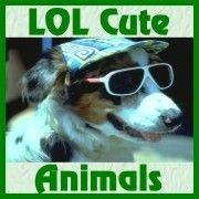 LOL Cute Animals