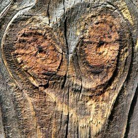 ze starego drewna .pl