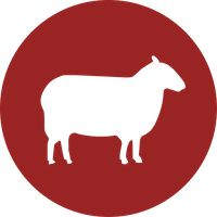 Vermont Natural Sheepskins