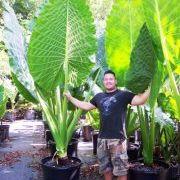 Brian's Botanicals