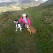 The Cornish View Charli