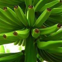 Banán Zöld