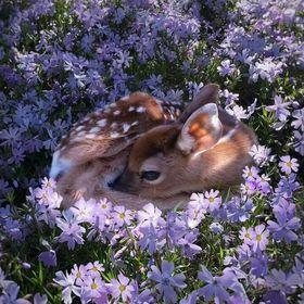Sleepingflower