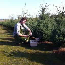 Kwekerij Dingemans // kerstbomen