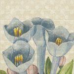 Blossom & Cloth