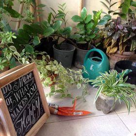 Home Gardening for Beginners