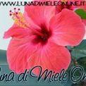 LunadiMiele On Line