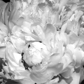 Agence Wild Flowers