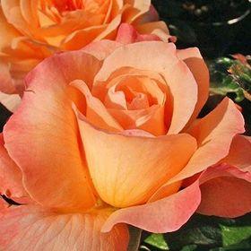 Annette Havenga