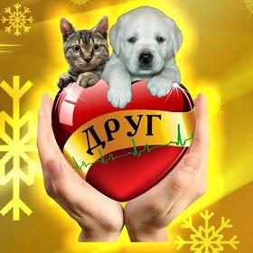 Сеть зоомагазинов и ветеринарных клиник ДРУГ
