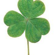 Celtic Trims