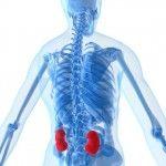 Kidney Disease Natural Cure