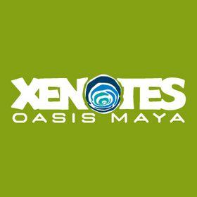 Xenotes Oasis Maya (xenotes) on Pinterest