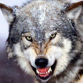 Mumma Wolf