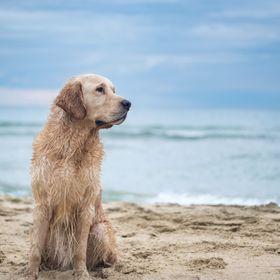 living with paws   Hundeblog: DIY, Gesundheit, Tipps, Urlaub